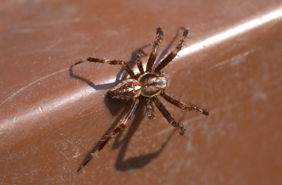 how to keep spiders away while sleeping-2