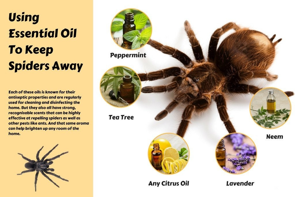 how to keep spiders away while sleeping-3