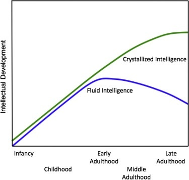 who is most likely to be enjoying a lifetime peak in both fluid and crystallized intelligence?-1